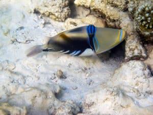 Die Unterwasserwelt der Malediven gehört zu den schönsten der Welt