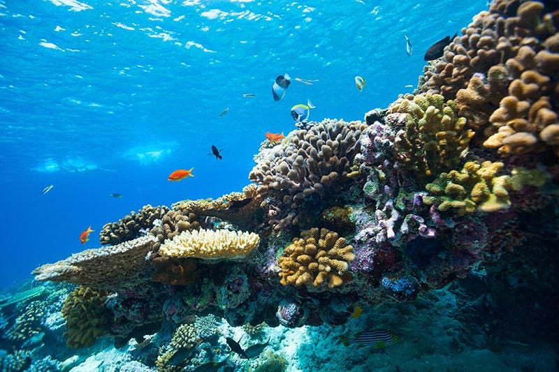 So wollen die Malediven ihr Unterwasserparadies retten