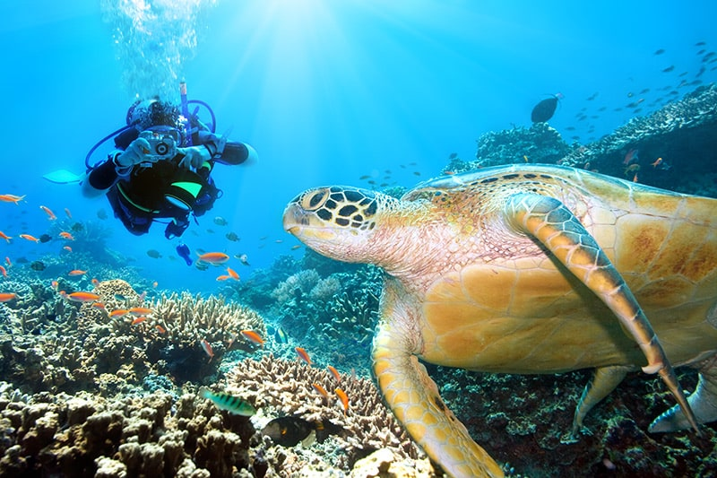 Tauchen auf den Malediven - das sind die besten Spots